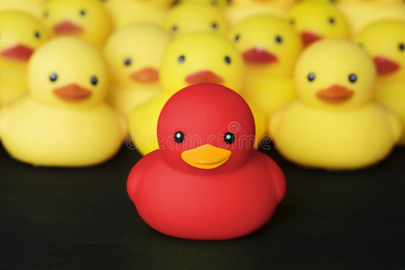 Closeup av rubber duckies med ledarskap arkivfoto