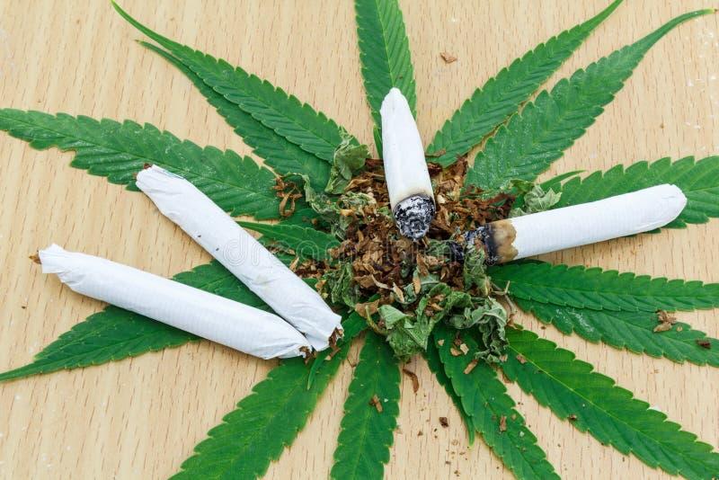 Closeup av torkad marijuana royaltyfria bilder