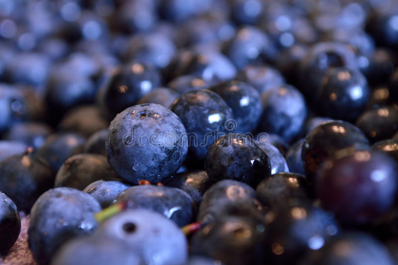 Closeup av våta blåbär fotografering för bildbyråer