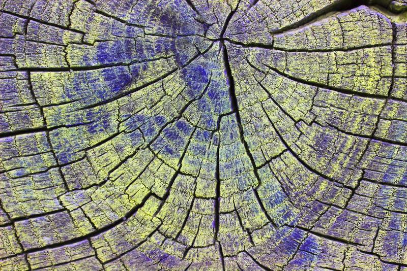 Closeup av varm plan wood textur Årliga cirklar av trädstubben royaltyfri bild
