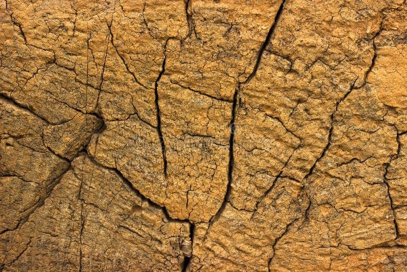 Closeup av varm plan wood textur med sprickor arkivbild