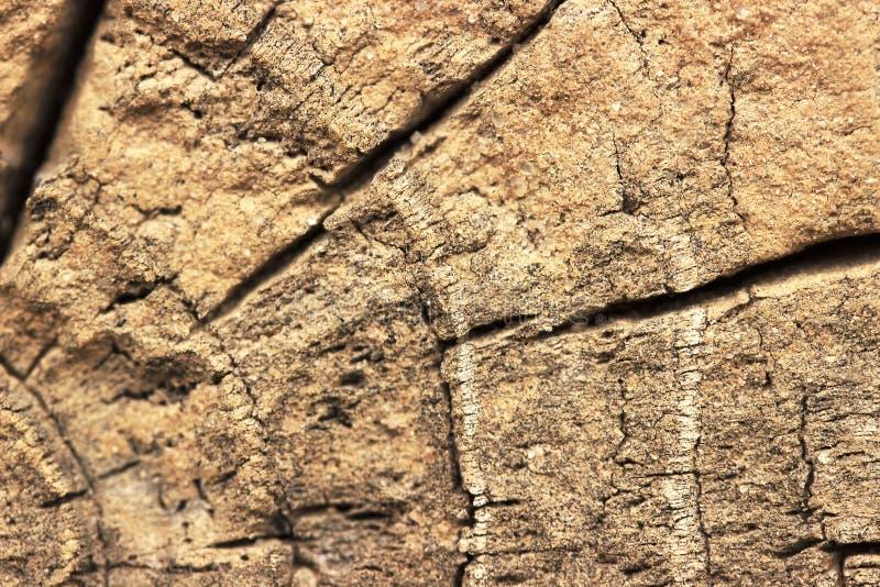 Closeup av varm plan wood textur med sprickor arkivbilder