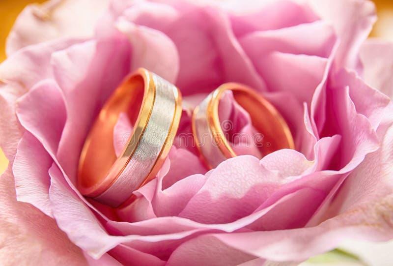 Closeup av vigselringar på rosa färgblomman royaltyfria bilder