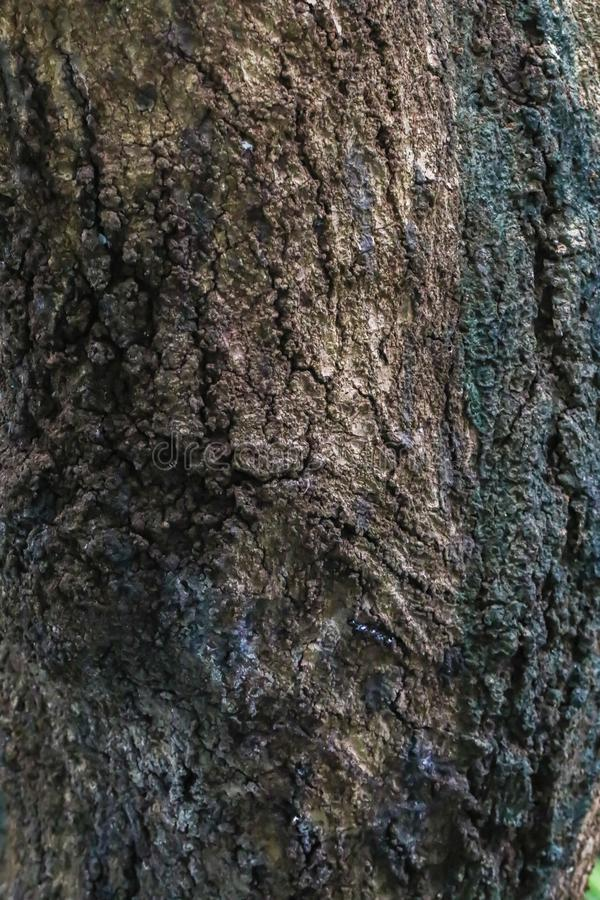 Closeup Background texture of tree bark wallpaper stock photos