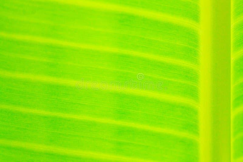 Closeup The banana leaf