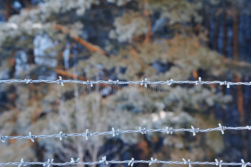 Closeup of barbed wire in winter. Closeup of frosted barbed wire with ice crystals stock images