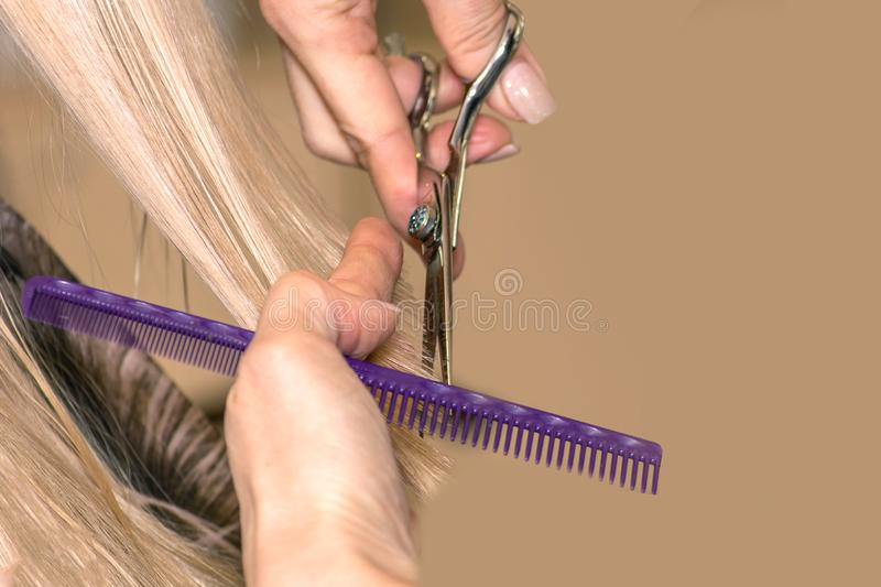 Closeup barber hairdresser cuts blond hair in a beauty salon. back view with sunlight royalty free stock images