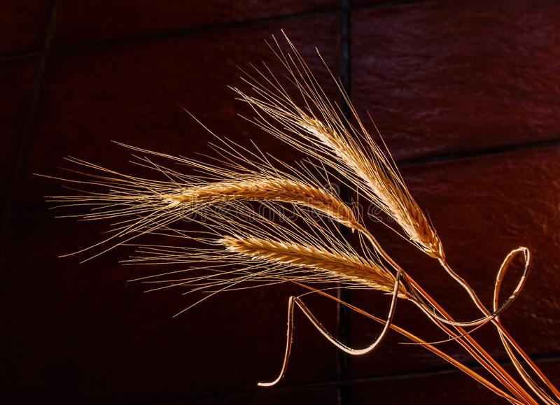 Closeup Of Barley Crop At Harvest Time Free Public Domain Cc0 Image