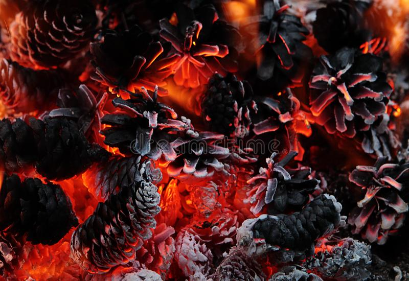 Closeup beautiful burning camp fire with pine cones royalty free stock photo