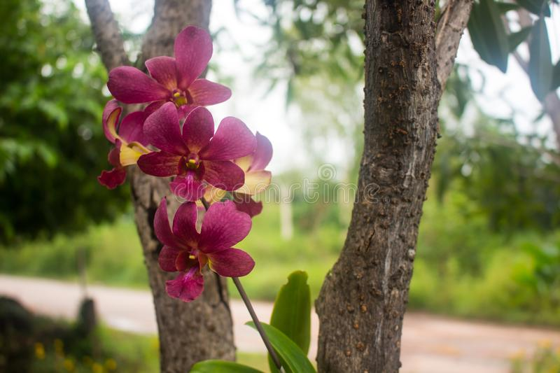 Beautiful colorful orchid bloom royalty free stock images