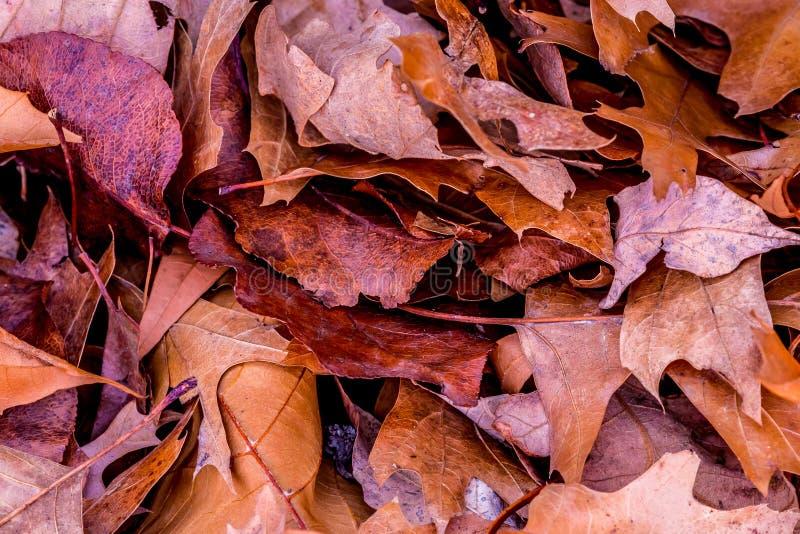 Closeup of Beautiful Intricate Fall Foliage. A Pile of Leaves Symbolizing the Autumn Season or Fall Holidays royalty free stock photos