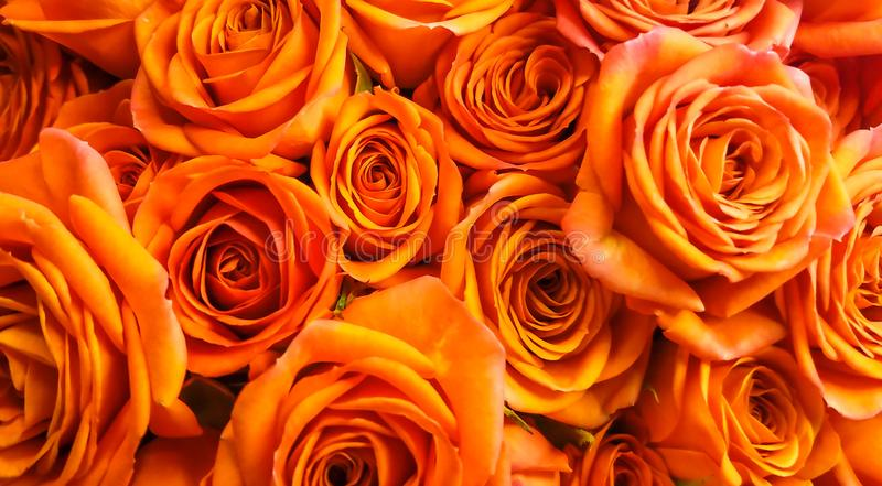 Closeup Beautiful Orange Roses Background Represents Passion Admiration Congratulations Excitement Bouquet Wallpaper Useful 106139007