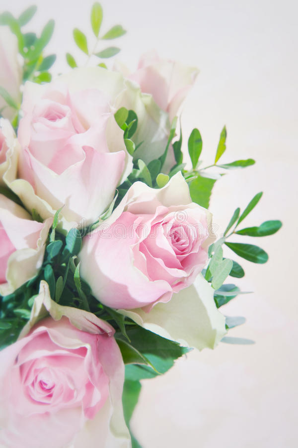 Closeup of a beautiful pink rose. In an arrangement of fragile pink roses with greenery over a white background stock photos