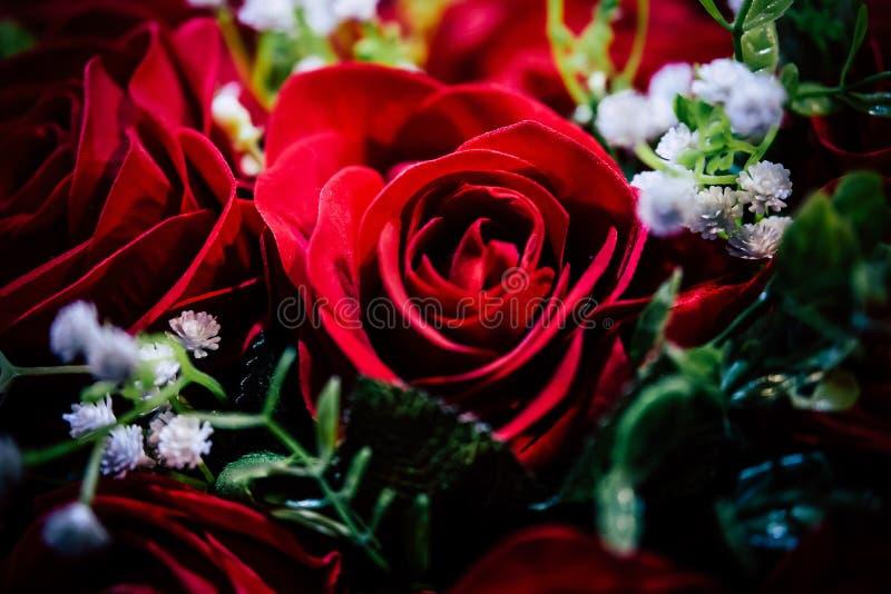 Closeup of a beautiful red rose stock photo