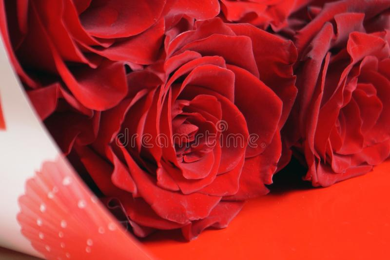 Closeup of a beautiful red roses . Floral background. royalty free stock image