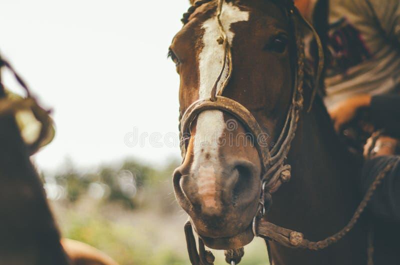 Closeup of a beautiful tamed horse royalty free stock photo