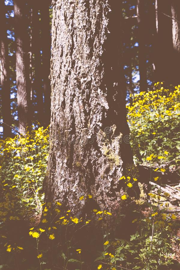 Closeup of a beautiful tree surrounded by greenery and yellow flower in a forest stock photography