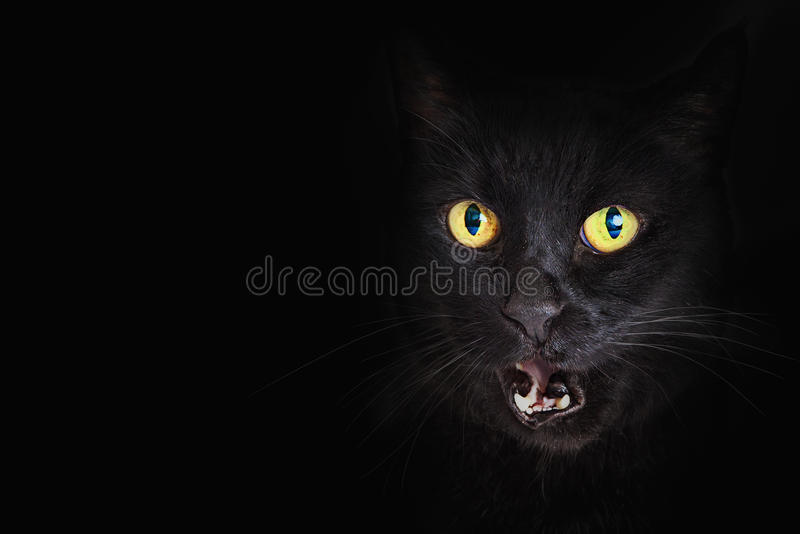Closeup Black Cat Mouth Open. Face of a scary hissing black cat with yellow eyes faded into black background with copy space stock photography
