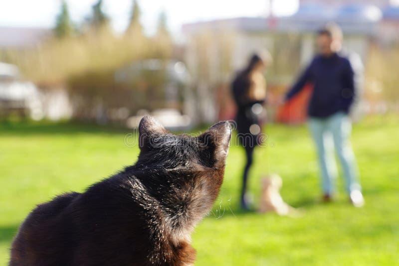 Closeup of black cat watching dog on grass royalty free stock image