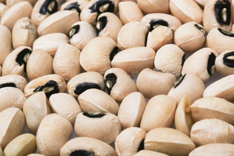 Closeup Black-Eyed Peas. Black eyed peas for nutritous concept background stock photo