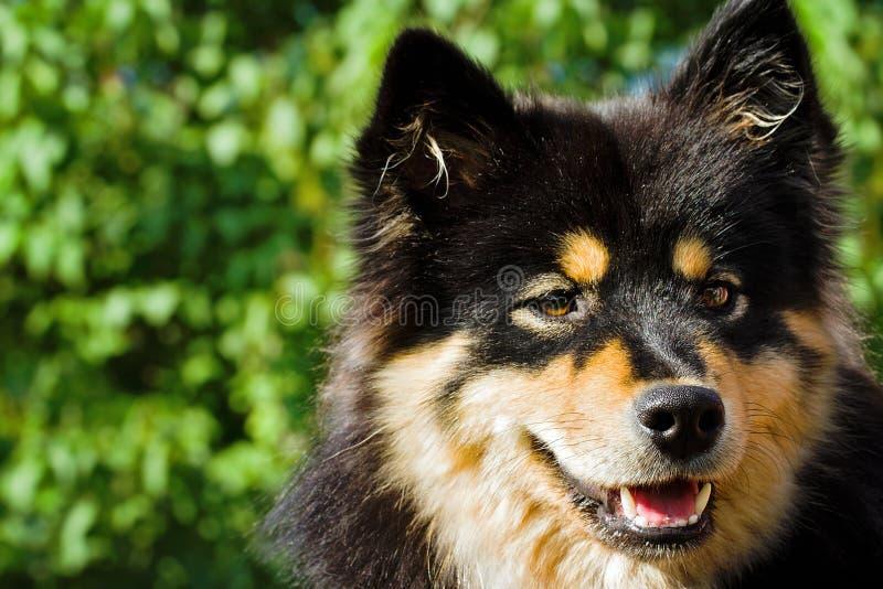 Closeup of black fur dog stock photos
