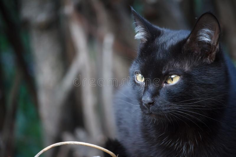 Close-up black shorthair cat with yellow eyes sits on the roof of the shed and carefully looks around royalty free stock image