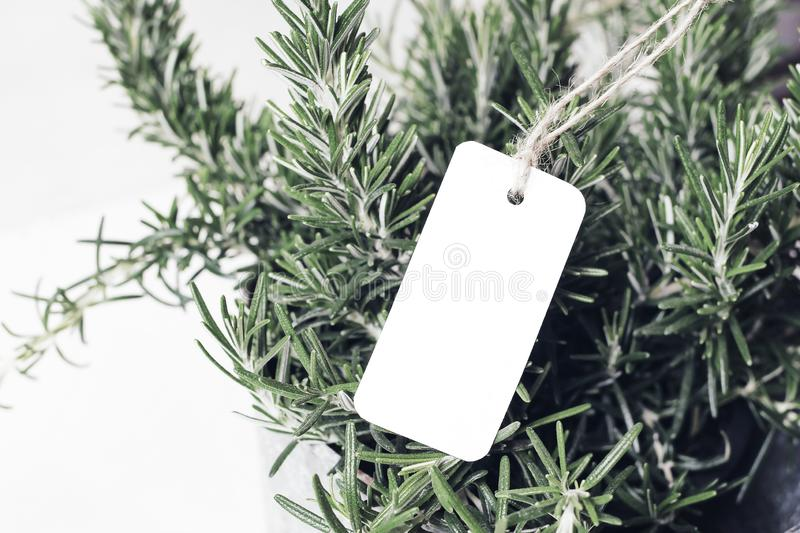 Closeup of blank white paper gift tag and rosemary plant. Price label mockup. Healthy food. Herb gardening. Selective royalty free stock images