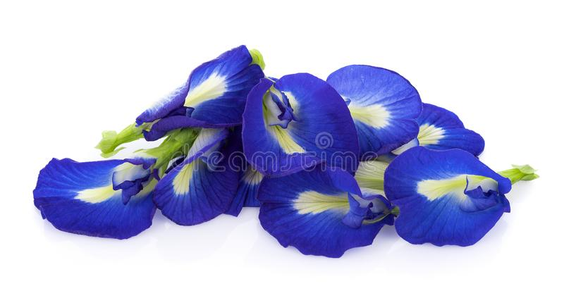 Blue pea flowers on white background royalty free stock photo