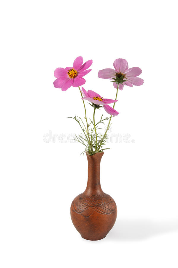 Closeup bouquet of Cosmos Flowers in the clay pitcher isolated on white royalty free stock images