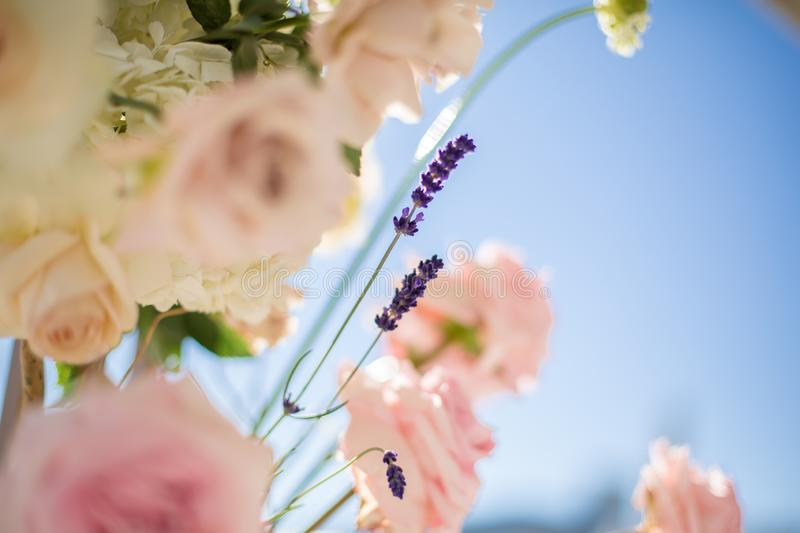 Closeup bouquet of fresh roses and lavander on blue sky background. Event decoration with fresh flowers stock photos