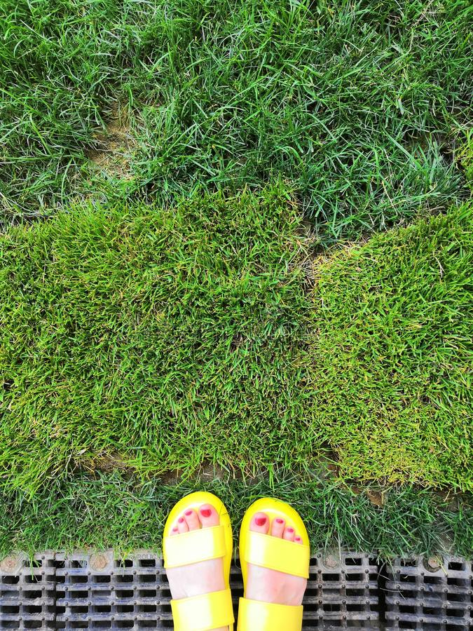 Closeup of bright yellow flip flops and legs on fresh green grass stock photography