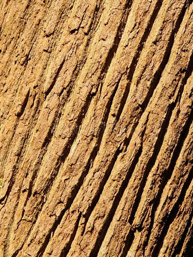 Closeup of brown tree trunk background. Close up of brown tree trunk background, Bukit Timah Hill Nature Reserve, Singapore stock photos