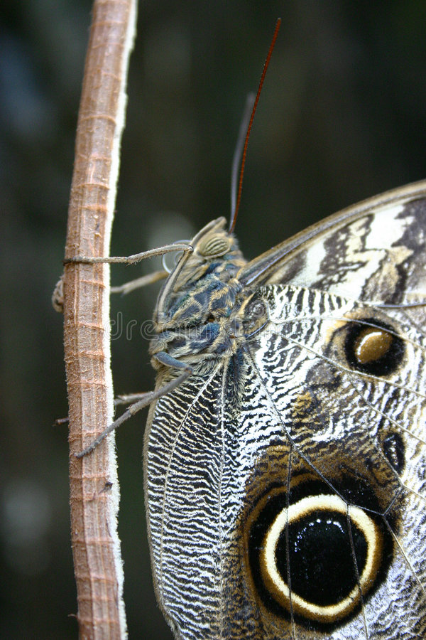 Closeup Of A Butterfly Stock Images