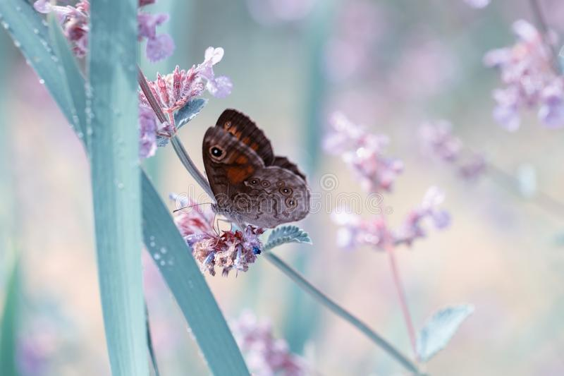 Closeup butterfly on blue small flower, beautiful meadow field with wild flowers. royalty free stock photo