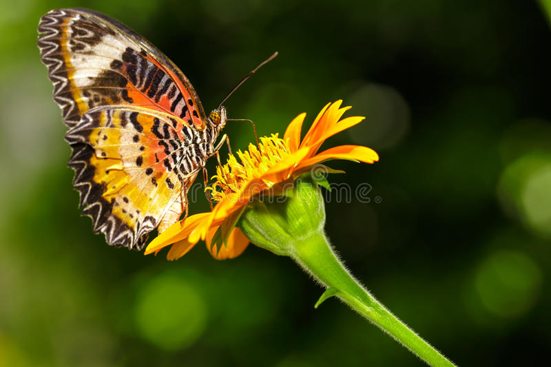 Download Closeup Butterfly On Flower Stock Image - Image of garden, attractive: 31356975