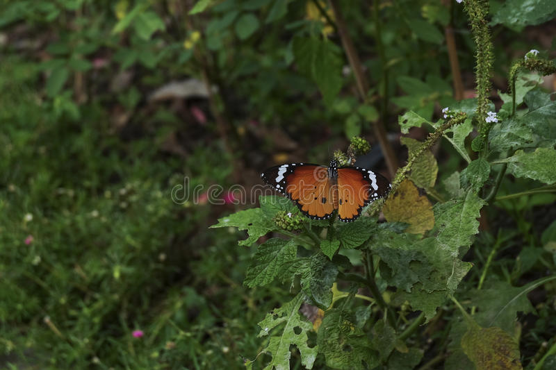 Closeup butterfly in nature royalty free stock image