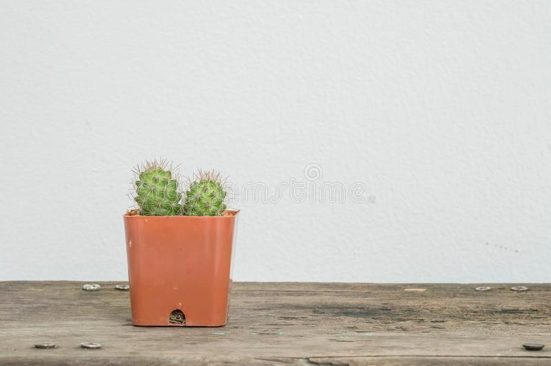 Closeup cactus in brown plastic pot on blurred wood desk and white cement wall textured background with copy space. Closeup cactus in plastic pot on blurred wood royalty free stock images