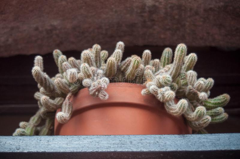 Cactus in terra cotta pot at window. Closeup of cactus in terra cotta pot at window royalty free stock photography