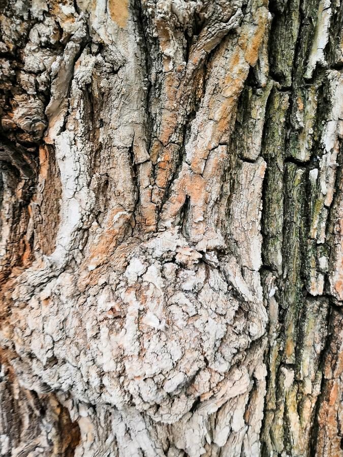 patterned tree bark gray-brown spots background. Natural green, yellow and brown spotted platanus tree texture stock photos