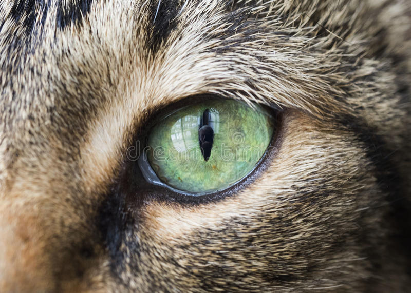 Closeup of Cat Eye. Closeup macro of vibrant green cat eye stock photography