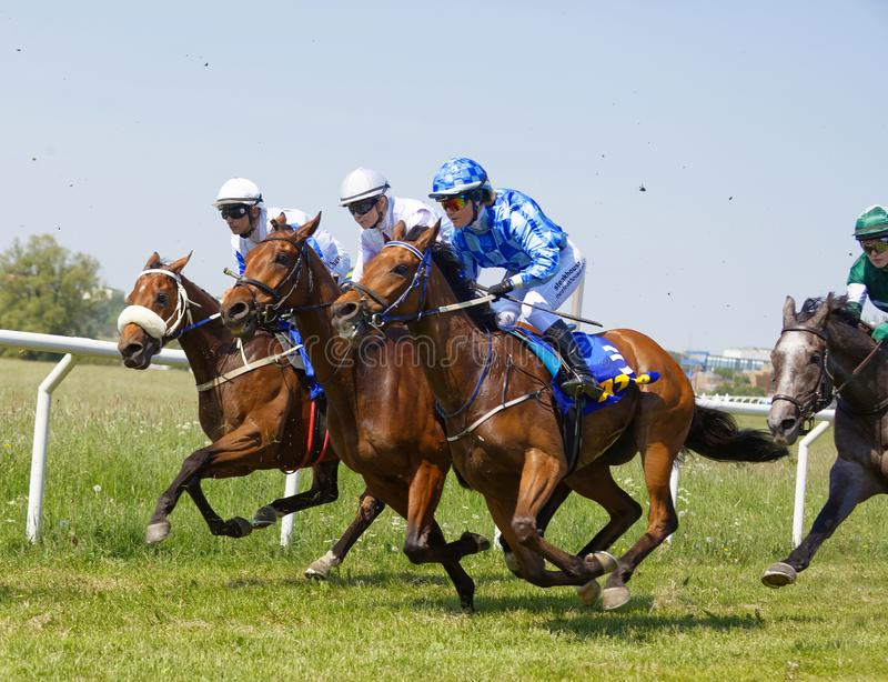 Closeup of a chaotic scene with jockeys riding arabian race horses side by side royalty free stock images