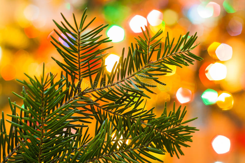 Closeup of Christmas tree surrounded by light background of Ch royalty free stock image