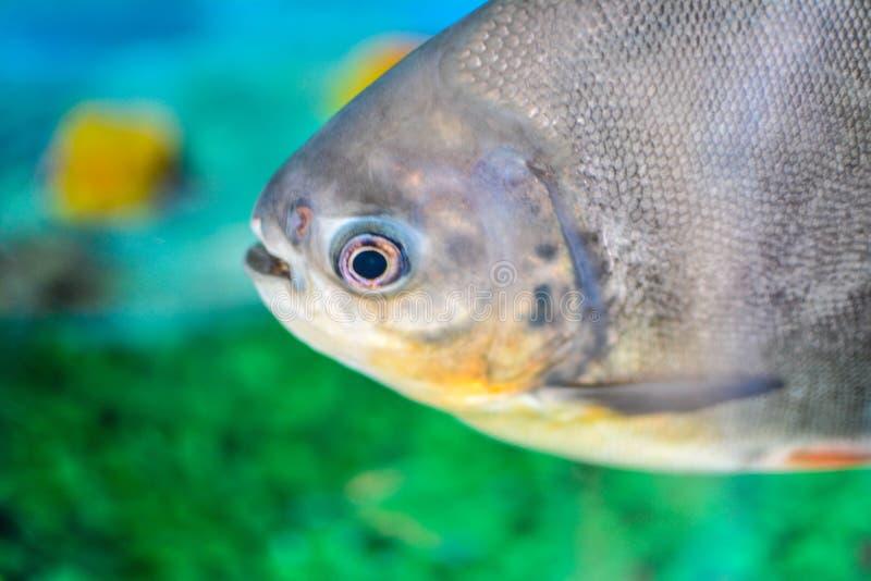 Fish. A closeup click of a fish from aquarium royalty free stock image