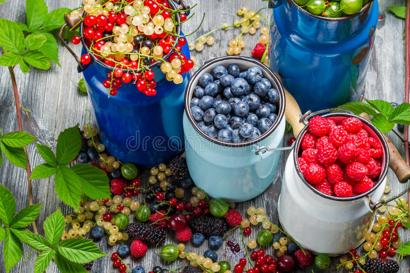Closeup of collecting fresh wild berries royalty free stock photo