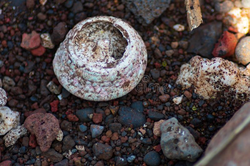 Closeup of coral fossil on stony beach royalty free stock photography