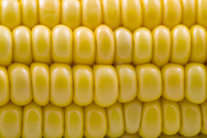 Download Closeup of corn cob stock photo. Image of consume, closeup - 11140916