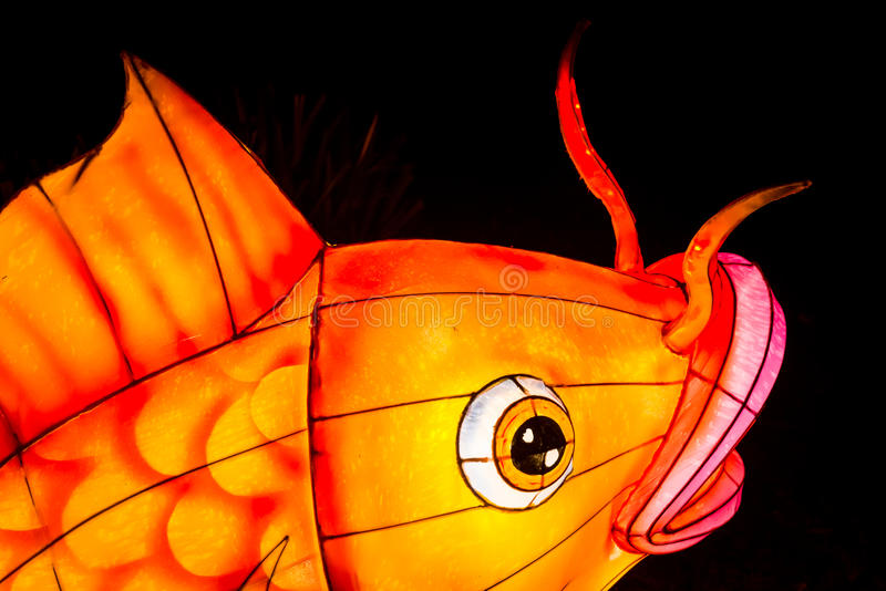 Closeup of coy fish lantern. London, United Kingdom - February 07, 2016: Magical Lantern Festival at Chiswick House And Gardens. Closeup of coy fish lantern royalty free stock image