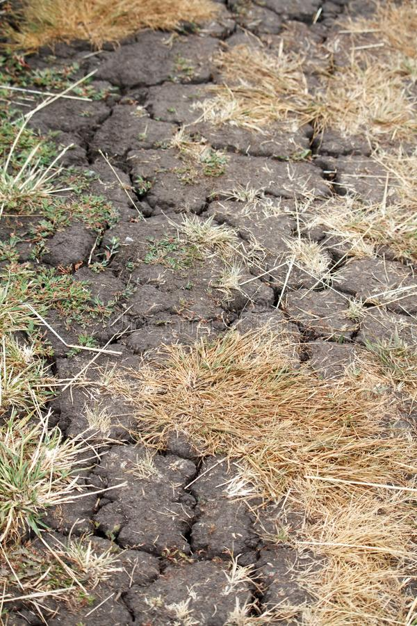 Close-up of cracked earth and dry grass, environmental concept, selective focus. Closeup of cracked earth and dry grass, environmental concept, selective focus royalty free stock image