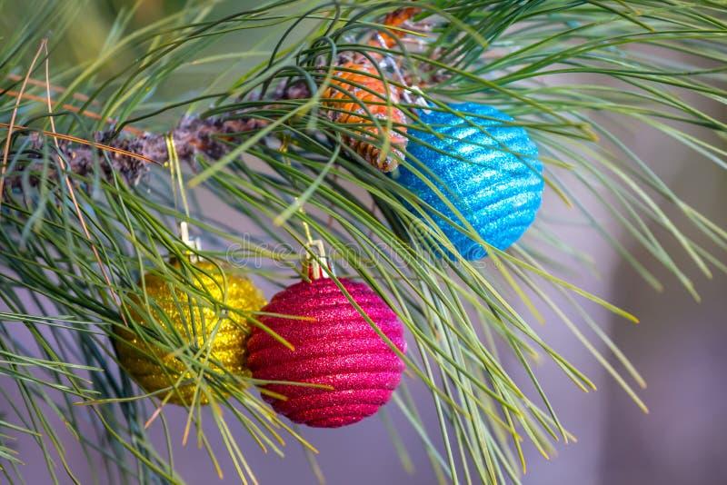 Closeup Cristmass jouets sur une branche de pin images libres de droits