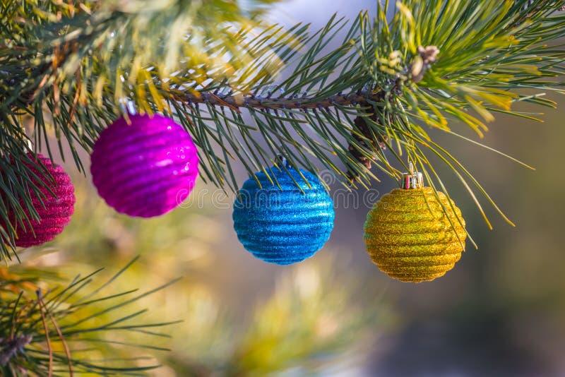 Closeup Cristmass jouets sur une branche de pin photos libres de droits